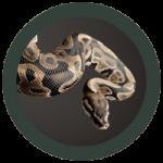 Qi Gong du serpent