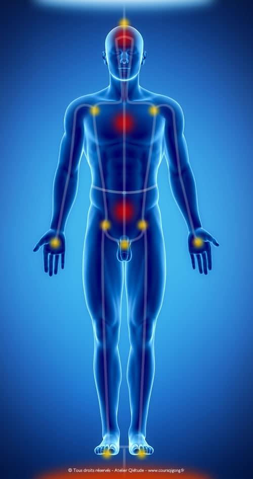 Anatomie corps énergétique en Qi Gong & Nei Gong
