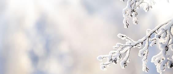 Qi Gong en hiver: entrez en douceur dans la quiétude