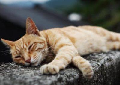 Posture de méditation d'un chat se relaxant