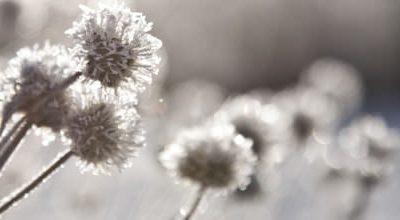 Qi Gong des saisons: Descente du givre 霜 降