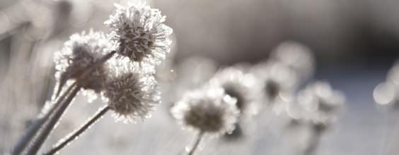 Qi Gong des saisons: Descente du givre 霜降