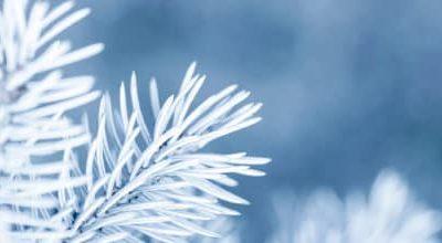 Qi Gong des saisons: Grande neige 大雪
