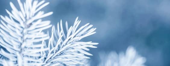 Qi Gong des saisons: Petite Neige 小雪