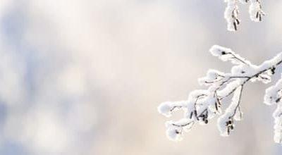 Petit Froid Qi Gong des saisons