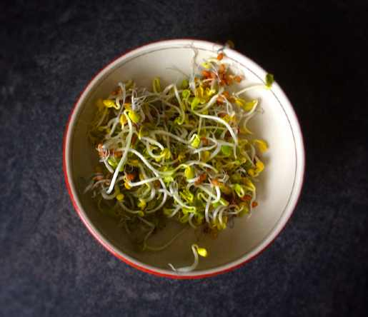 Diététique Chinoise : graines germées