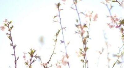 Qi Gong des saisons: L'équinoxe du printemps 春分