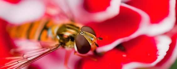 Qi Gong des saisons: Réveil des insectes 惊蛰