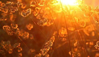 Qi Gong des saisons: Lumière Pure 清明