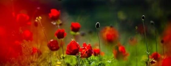 Qi Gong des saisons: début d'été 立夏