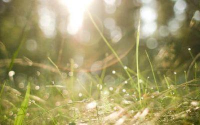 Qi Gong des saisons: Petite Chaleur 小暑