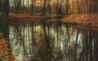Qi Gong des saisons : Début de l'automne 立秋