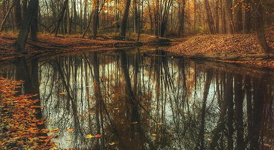 Qi Gong des saisons: Début de l'automne 立秋