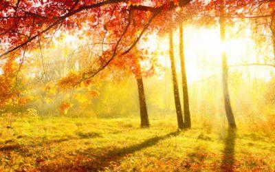 Qi Gong des saisons : Equinoxe d'automne 秋分