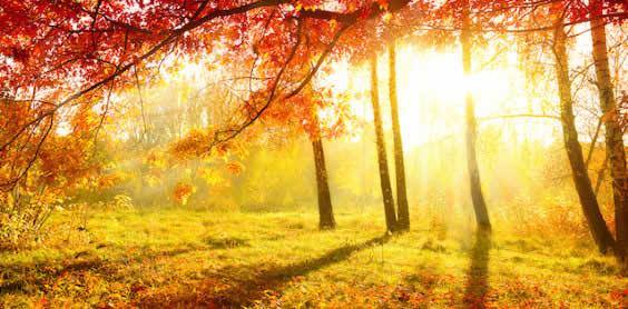 Qi Gong des saisons: Equinoxe d'automne 秋分