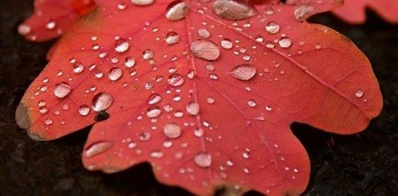 Qi Gong des saisons: 白露 Rosée blanche