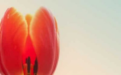 Les exercices de Qi Gong de l'été : le feu est à l'honneur !