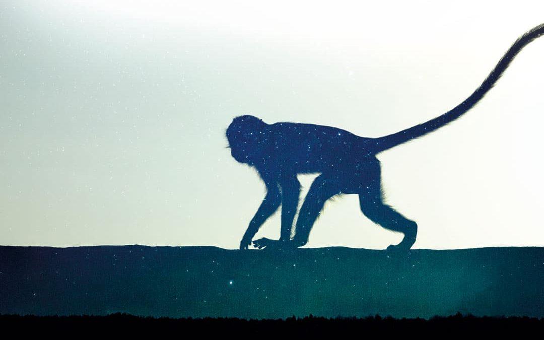 L'année du singe de Feu: spiritualité & transformation