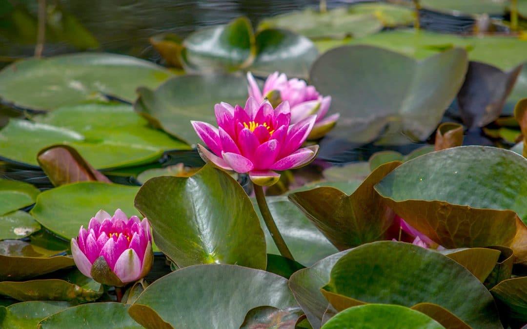 Qu'est-ce que le Yang Sheng dans la tradition daoïste?