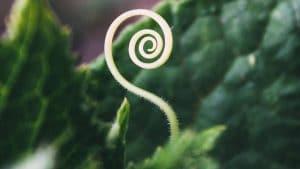 spirale qigong femme 300x169 - Retraite des femmes  : la force du Yin
