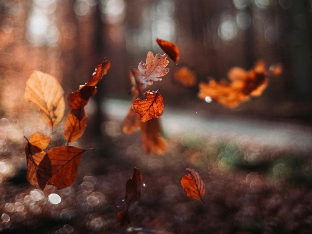 L'automne saison pour libérer nos tensions
